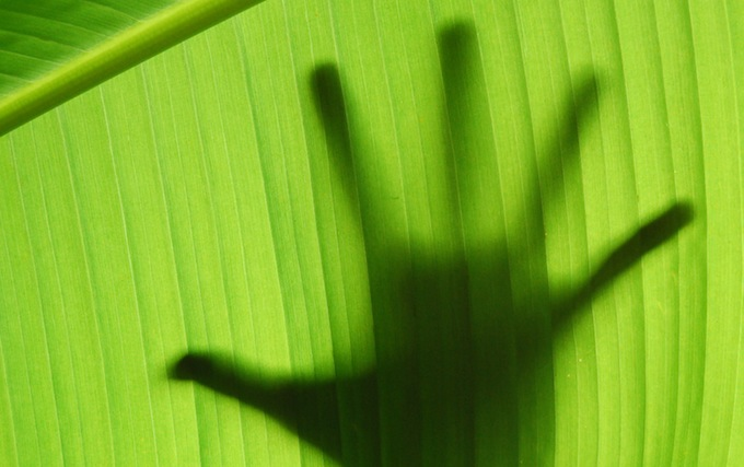 Hand silhouette behind banana leaf