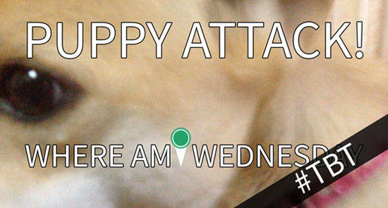 "Close-up picture of a dog's face with white text in the foreground that says ""Puppy Attack! Where Am I Wednesday"""