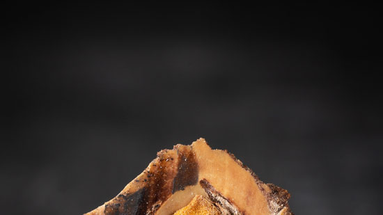 Image contains a dark background with a peach pt in the middle. The pit has been cut open to show the light brown seed.