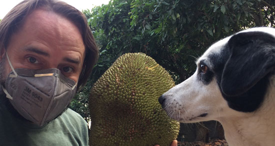 Image contains a large, leafy green tree in the background. In the foreground, there is a man on the left wearing a face mask. The man is holding a large spiny light green fruit to his right, and there is a dog with black patches around her eye that is looking directly at the man.