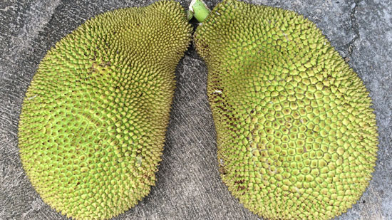Image contains a photo of a large jackfruit that has been cut in half. Both halves are faced down on concrete with the green, bumpy side facing up.