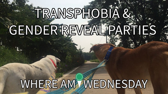 """Image contains a photo of two dogs being walked. One dog is red and the other is white with black patches. The two dogs are on leashes, which can be seen coming from the bottom of the screen toward the dogs. In the background, there is a small road, blue sky, and trees and bushes. Above the dogs, there is white text that says """"Transphobia & Gender Reveal Parties"""" and below the dogs the text says """"Where Am I Wednesday""""."""