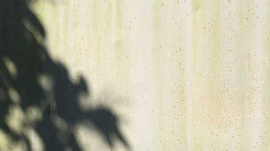 Image contains a photo of a metal wall with pale water stains. To the left, the shadow of a tree branch and numerous leaves can be seen.