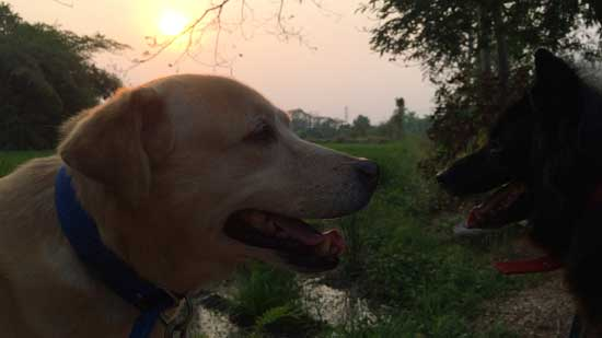 Image contains a photo of the heads of two dogs looking at each other. In the background, there is an orange sunset.