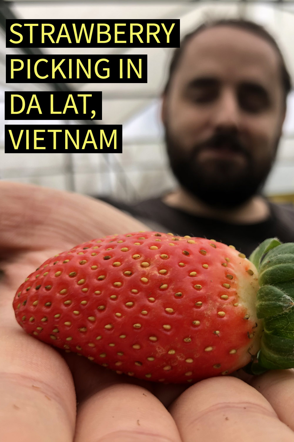 "Image contains a photo of a man holding a bright red strawberry in his right hand. The strawberry is clearly visible in the foreground while the man is out of focus in the background. In the top left of the image, there is yellow text that says ""Strawberry Picking in Da Lat, Vietnam""."