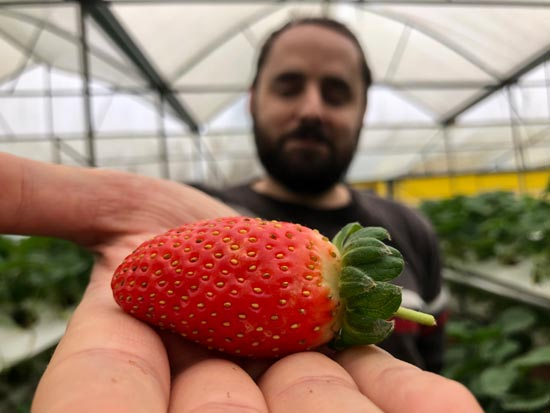 Image contains a photo of a man holding a bright red strawberry in his right hand. The strawberry is clearly visible in the foreground while the man is out of focus in the background.