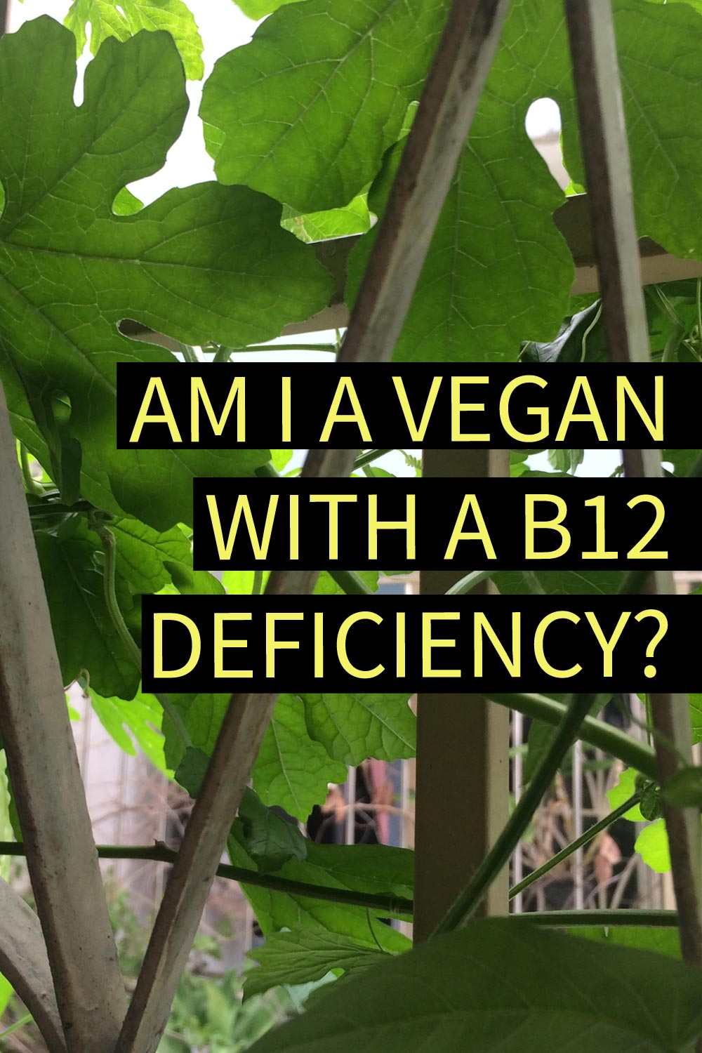 "Image contains a photo of a fence covered in green leaves and vines. On top of the photo, there is yellow text that says ""Am I A Vegan With A B12 Deficiency?"" and black bars behind it."